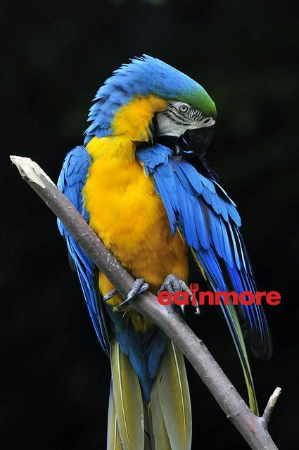 vet blue and gold macaw 3