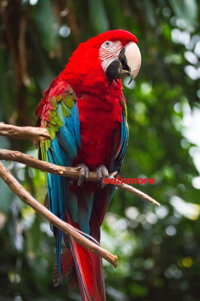 vet green winged macaw 2